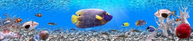 Каталог изображений для скинали подводный мир океана с рыбами.