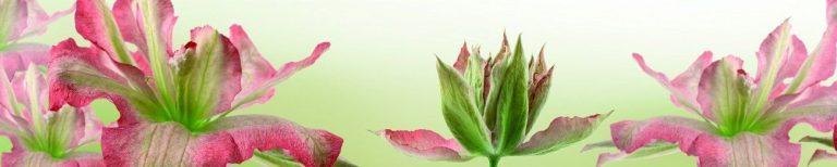 Фартук для кухни скинали лилии розовые цветы.