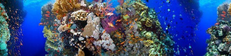Фартук для кухни скинали подводный мир с рыбками, коралловые рифы.