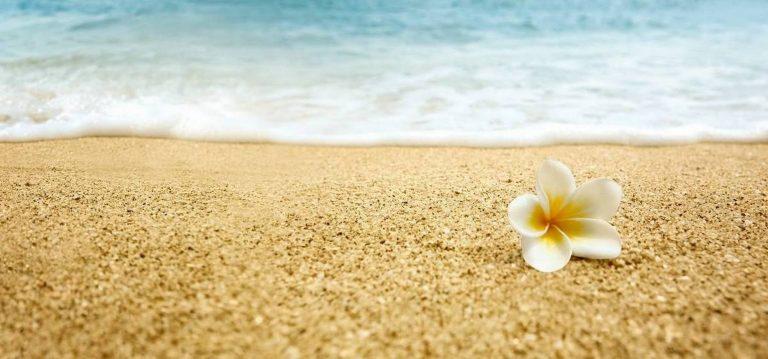 Скинали Плюмерия на песке каталог изображений