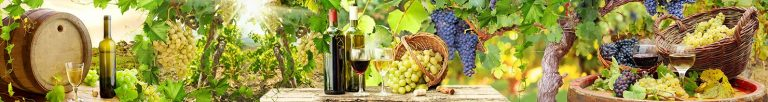 Каталог изображений для скинали виноград.