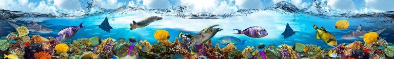 Каталог скинали коралловые рифы карибского моря, подводный мир