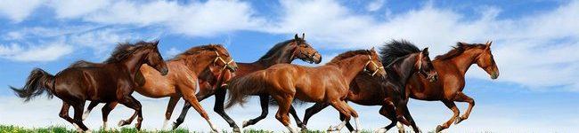 Каталог изображений для скинали бегущий табун лошадей.