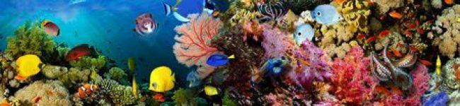 Каталог изображений для скинали подводный мир кораллы.
