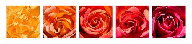Каталог изображений для скинали бутоны роз