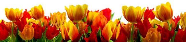 Каталог изображений для скинали оранжевые тюльпаны.