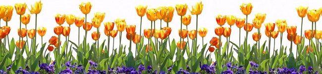 Каталог изображений для скинали красно-желтые тюльпаны.