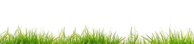 Каталог изображений для скинали зеленая трава.