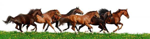 Фартук для кухни скинали табун бегущих лошадей.
