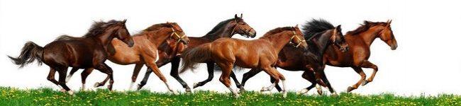 Каталог изображений для скинали табун бегущих лошадей.