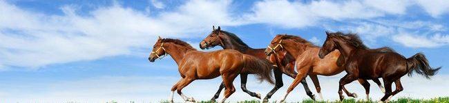 Каталог изображений для скинали табун несущихся коней.