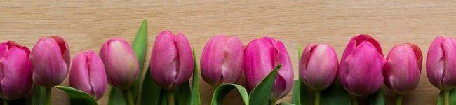 Каталог изображений для скинали розовые тюльпаны.