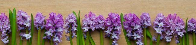 Каталог изображений для скинали фиолетовый гиацинт.