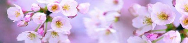 Каталог изображений для скинали цветущая яблоня.