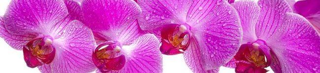 Каталог изображений для скинали розовая орхидея с каплями воды.