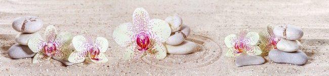 Белая орхидея среди камней.