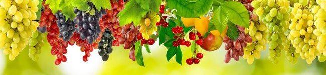 Цветные виноградные грозди, виноград.