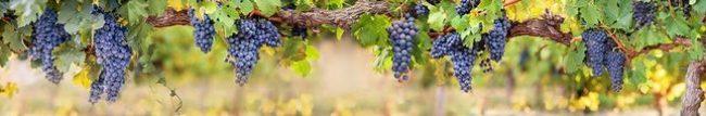 Фартук для кухни скинали виноград.