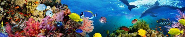 Каталог изображений для скинали аквариум.